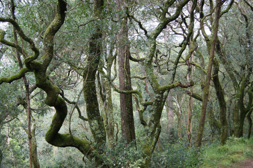 Buçaco Forest